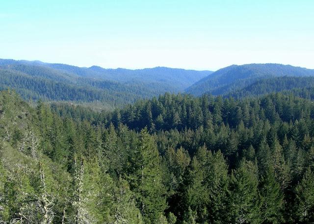 Waddell Creek Canyon