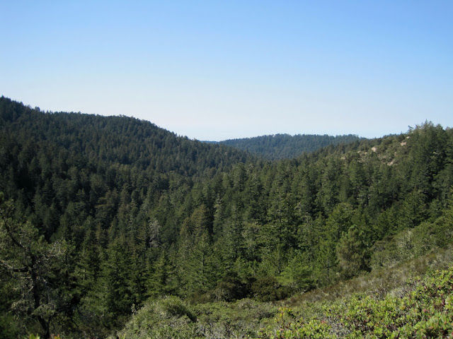 View of Little Butano Canyon