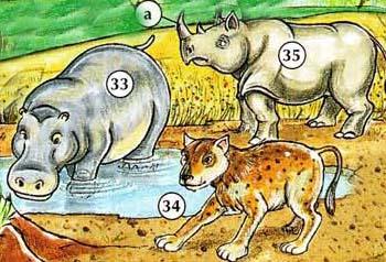 33. hippopotamus  34. hyena  35. rhinoceros a. horn