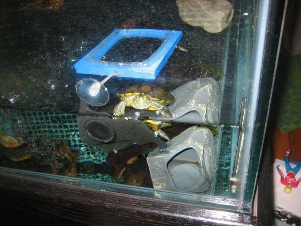 red ear slider pet turtle tank