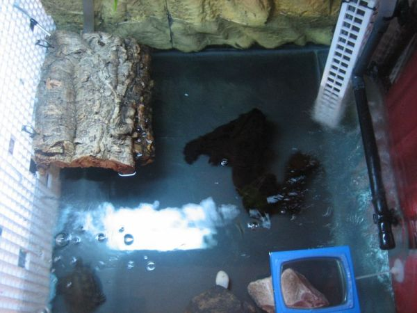 My female red ear slider turtle's tank area