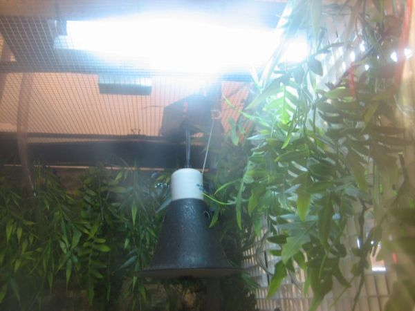 turtle UVB and heat lamp basking lights and fixtures