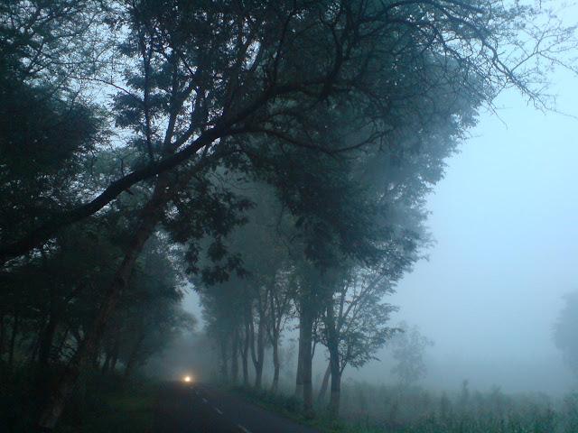 Kabut Di Sepanjang Lintasan Jogging