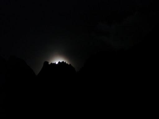Luna timida