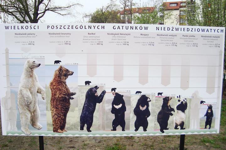 Wszystko, co chcielibyście wiedzieć o niedźwiedziach...