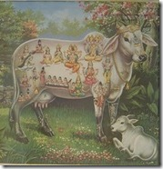 Cow God