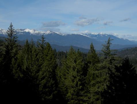 Shasta-Trinity mountains