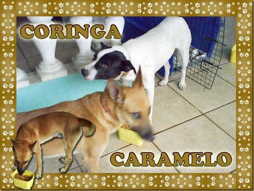 coringa_caramelo