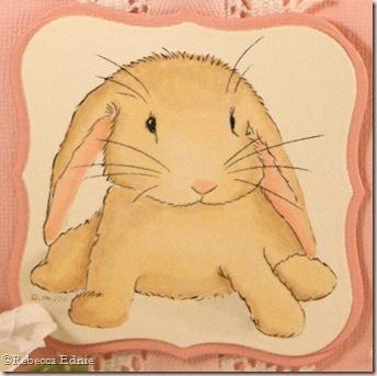 baby bunny wabbit closeup