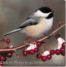 occ chickadee-wintershot.thumbnail