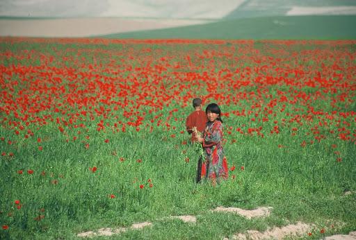 Children play in the Poppy fields of the Autonomous Region of Poppyistan