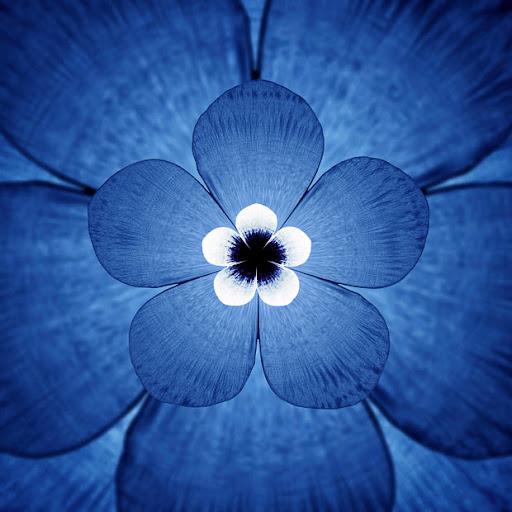 white-beak-flower_1529877i.jpg