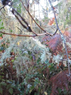 Damp branch