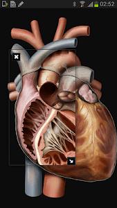 Virtual Human Body screenshot 4