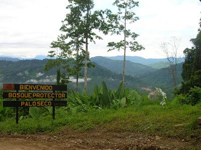 Bosque Protector de Palo Seco, área de amortiguamiento del Parque Internacional La Amistad (ambas áreas protegidas son Reserva de la Biósfera)