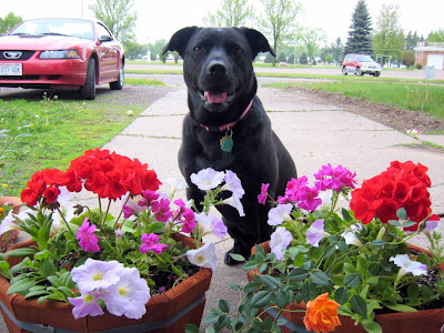 Amy with Geraniums