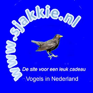 Vogels in Nederland