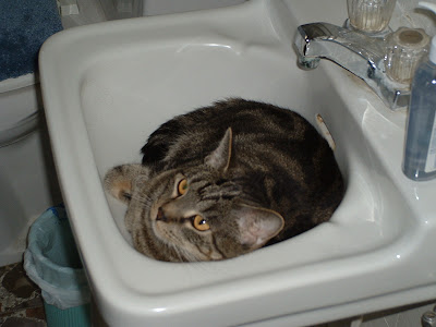 Time to call the MeowMix Plumber.