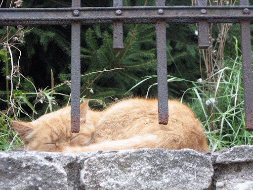 Kutna Hora cat