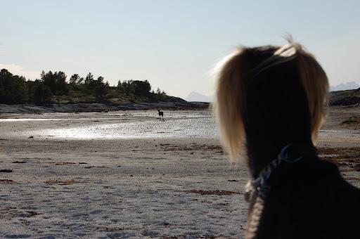 Reinsdyra til Julenissen hadde også lagt ferien til strendene på Tranøy