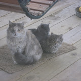 Fluffy & Kittens, Snickers and Scooter