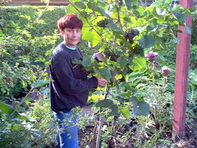 Alla and the red grape 'Rondo'