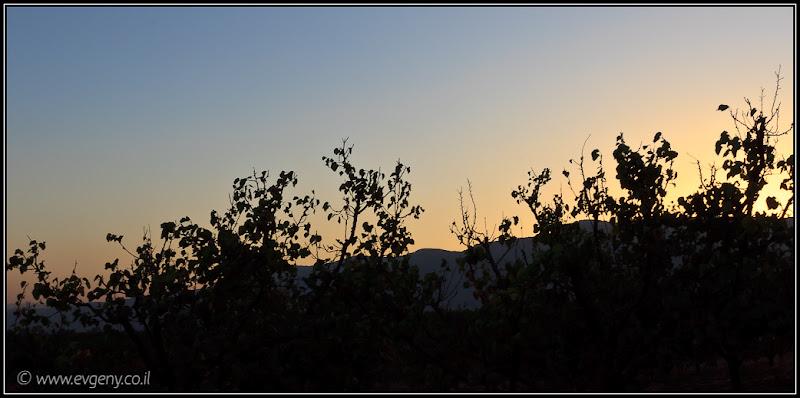 Одно фото / Израиль, Вечереет в верхней Галилее