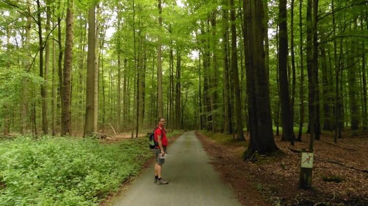 in het Zoniënwoud op weg naar Groenendaal
