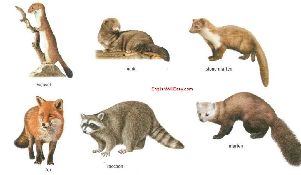 Carnivorous mammals - ...