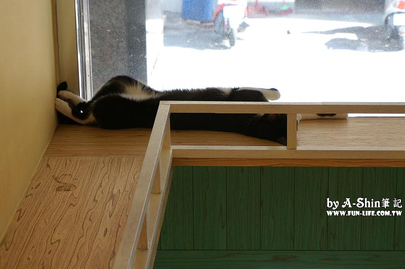 這裡有貓cafe4