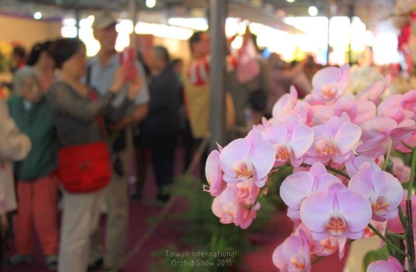2015 台灣國際蘭花展-8