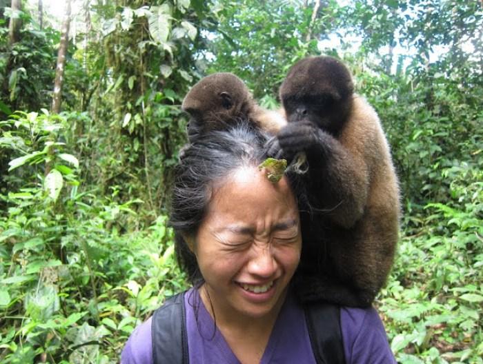 Overrun by monkeys in Puyo, Ecuador