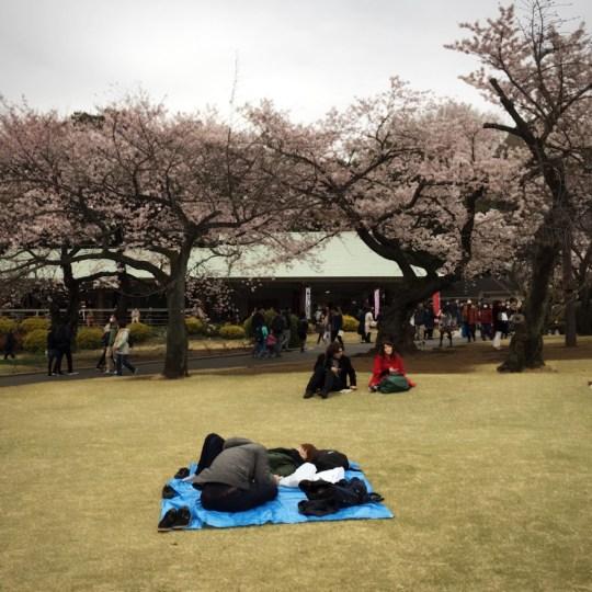 hanami japan shinjuku gyoen