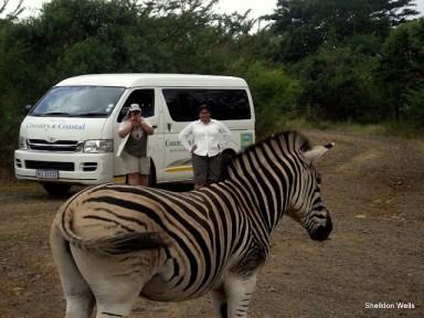Zebra Posing at Mpila Camp