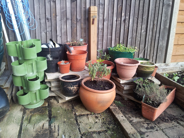 Herbs in pots, in different configuration (see text)
