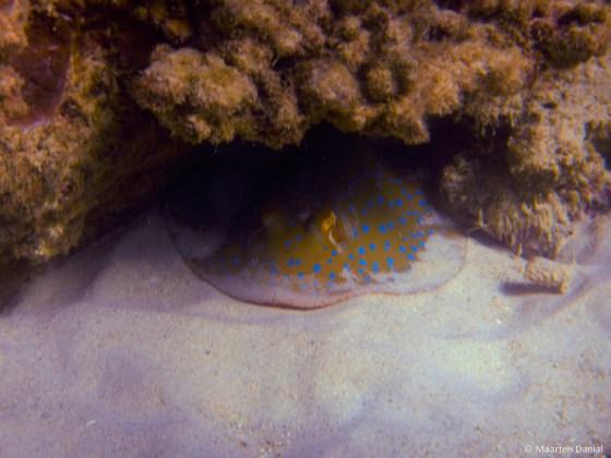 Run Ride Dive KZN Diving News