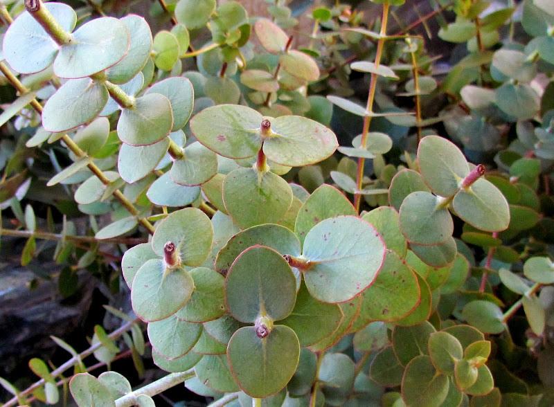Eteriniai aliejai: alternatyvus peršalimo ligų gydymas