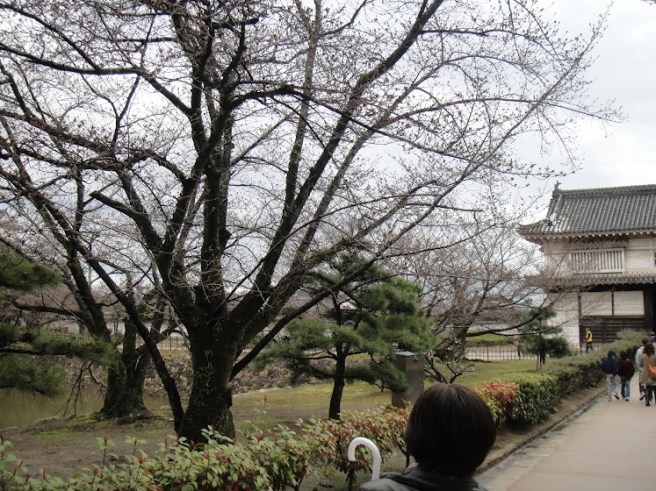 Gardens! With barren trees! Buhii