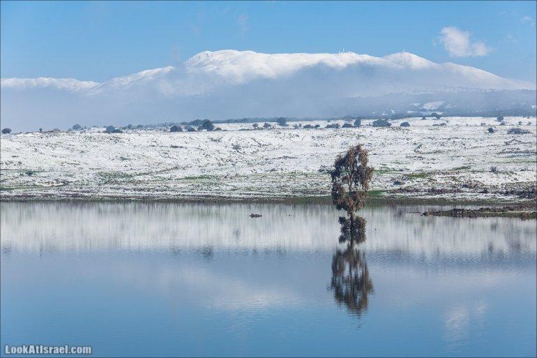 LookAtIsrael.com - Одинокое зимнее дерево на фоне заснеженой горы Хермон