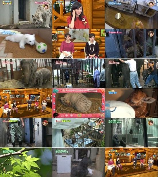 (TV-Variety)(720p) 前田敦子 – こんにちは!動物の赤ちゃん 2014 141224