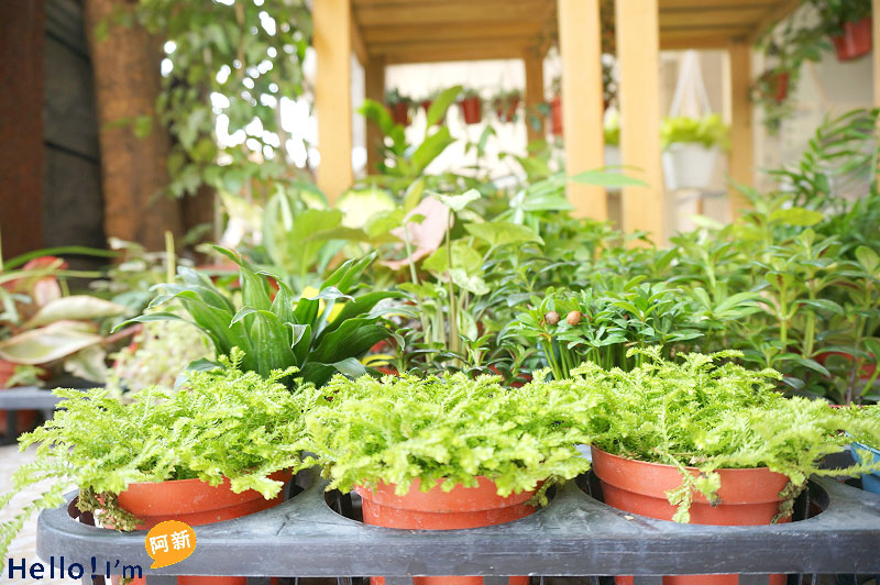 台南盆栽店,日光夏蘭植物工房-4