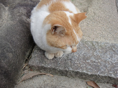 Orange white fat cat