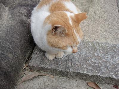 Orange white fat cat
