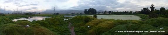 Humedal La Libelula