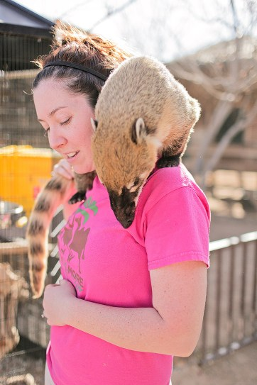 Coati at Roos n More Zoo Moapa NV.
