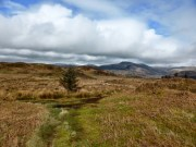 A lonely tree on the Muncaster Fell ridge