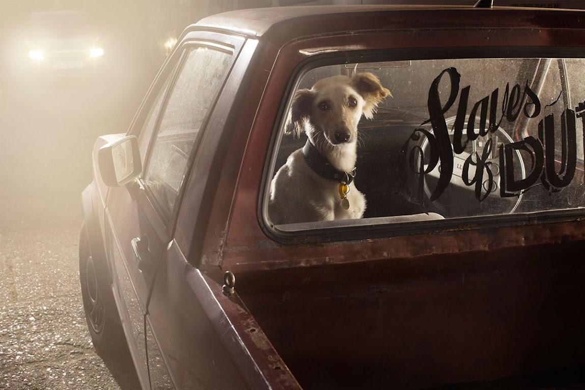 *被鎖在車內沉默的狗:攝影師Martin Usborne 黑暗呈現! 8