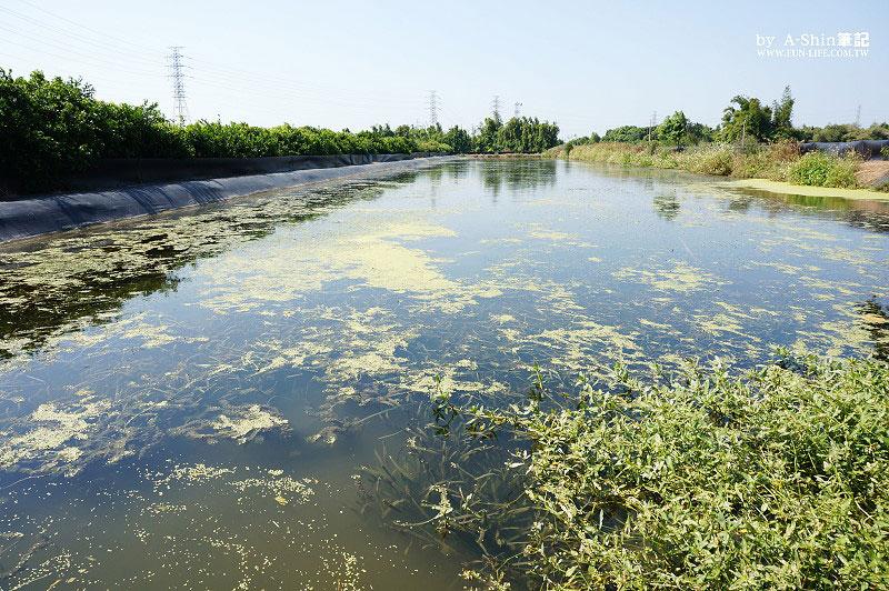 慶東大閘蟹生態農場7