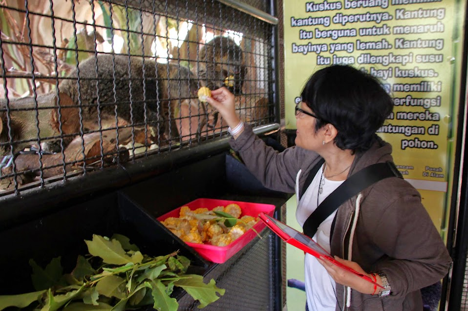 memberi makan hewan