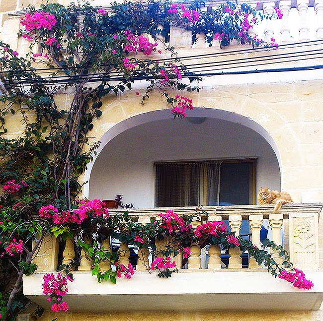 pretty week, pictures, cats, landscapes, malta